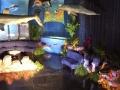 Under the Sea (7)